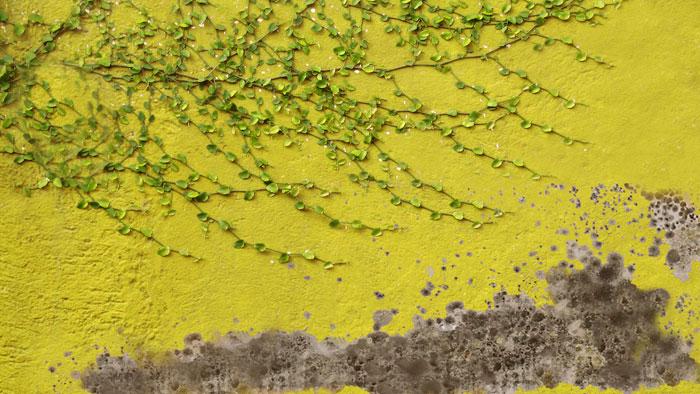 Sanacija kondenzne vlage in zidne plesni v stanovanju / www.timopara.si